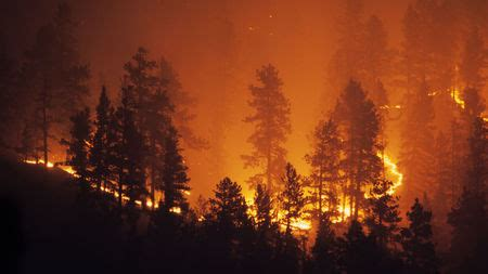 Ecosystems could once bounce back from wildfires