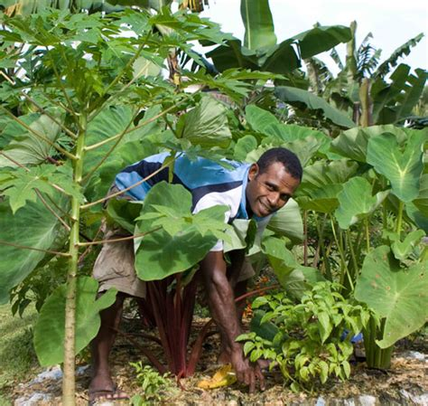 SPC: Organic Farming, Nothing New to Pacific Farmers - PNC